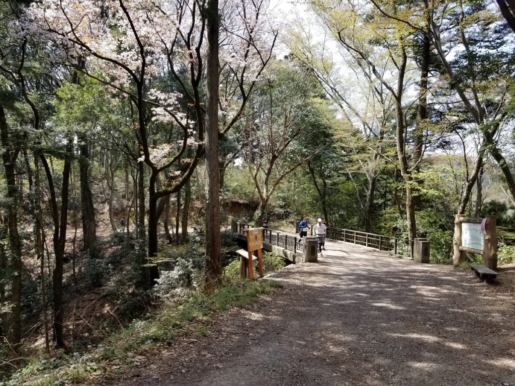 Spring on the trails of Ome in west Tokyo