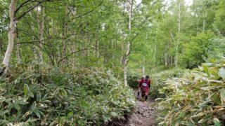 Into the Wild: Scaling Sugadaira