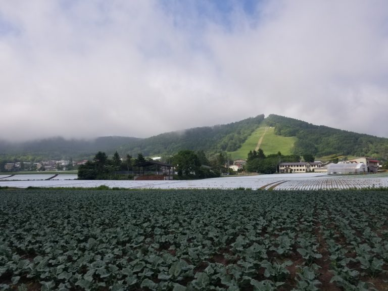 Green farm land in Nagano with mountainous backdrop