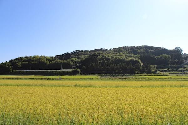 Beautiful rice fields in Shimane