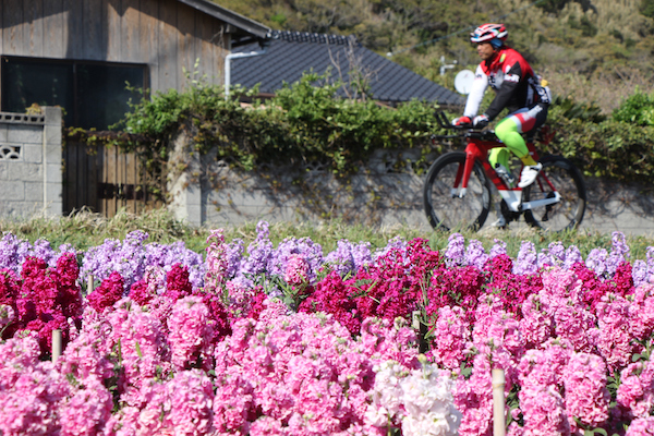 Cyclist riding by flowers