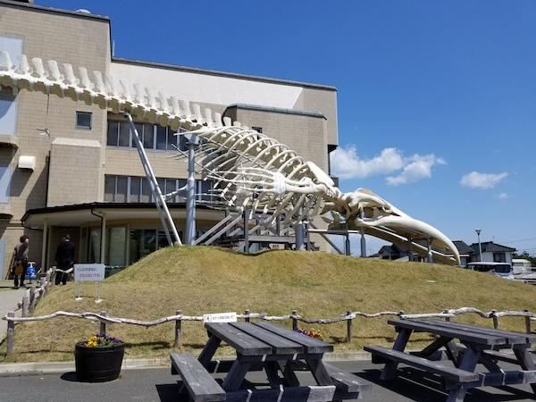 Dinosaur skeleton on Great Earth Chiba Minambi Boso Long Ride