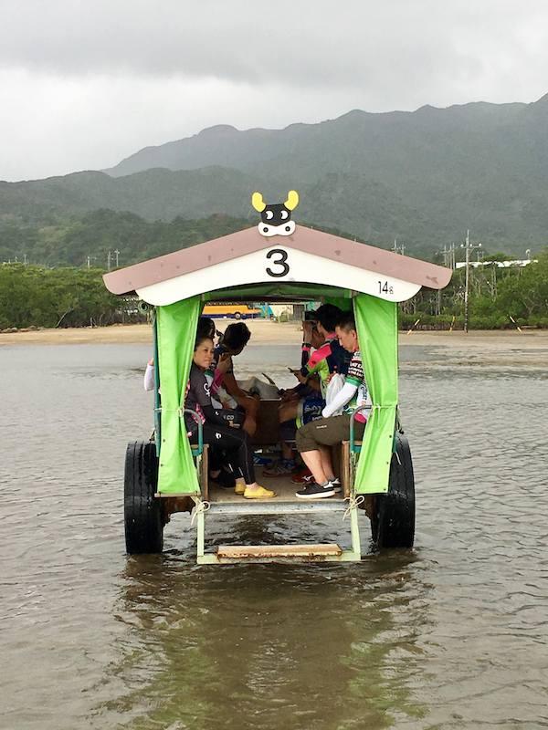 Cyclists on buffalo cart in Ishigaki