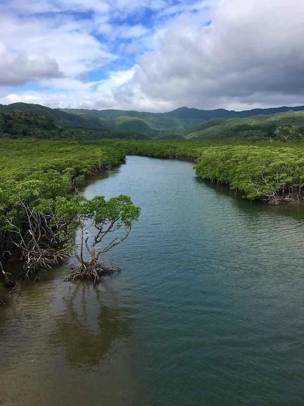 Mangroves in Ishigaki