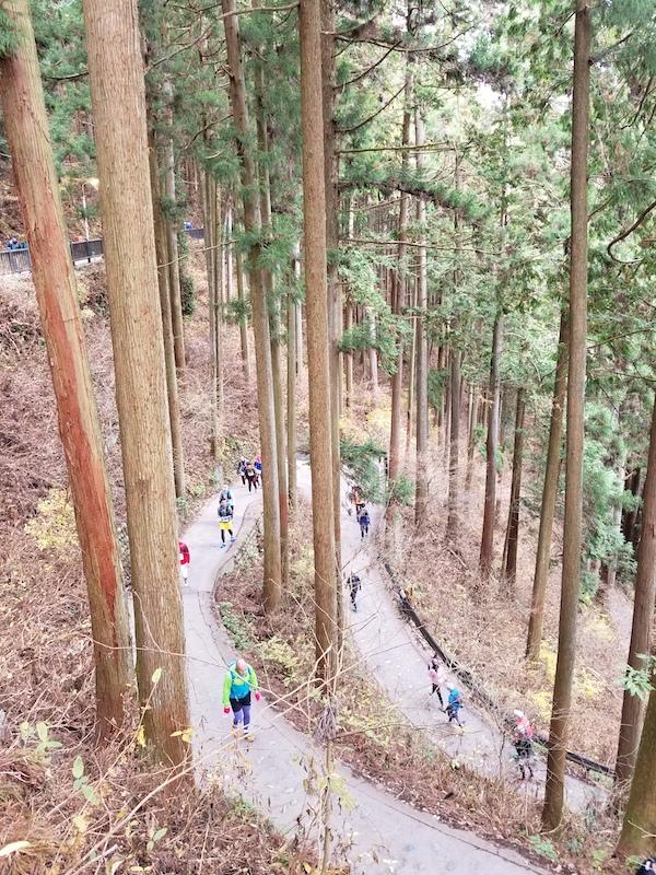 Switchbacks in Japan's woods