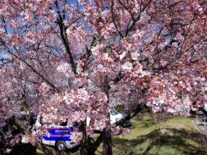 Cycling in Nagano: Alps Azumino Century Ride – Sakura Group
