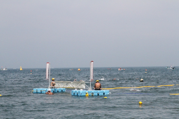 gate on Tateyama open water swim course