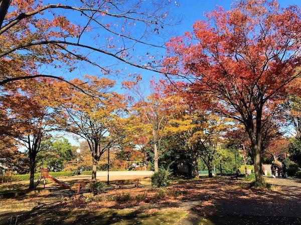 Hijirigaoka in Autumn