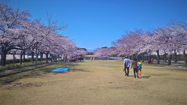 Fujimi-dori in Spring