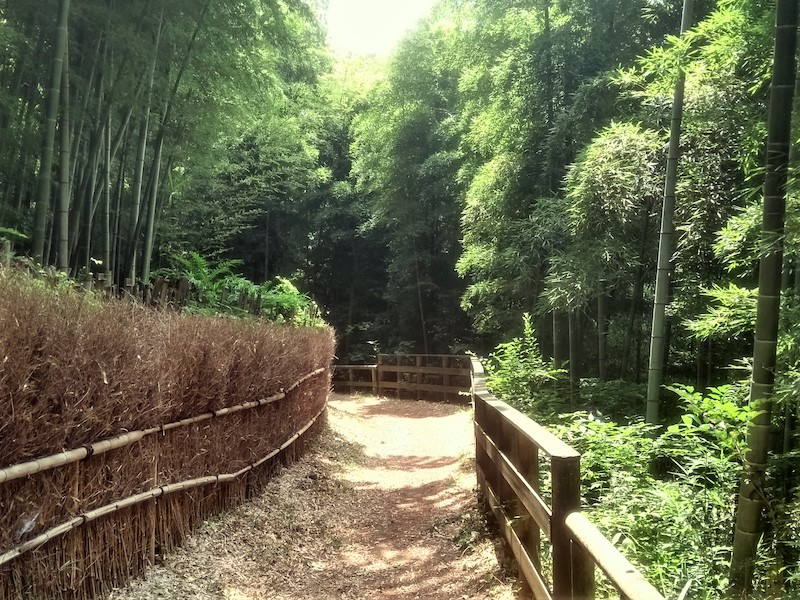 Aso citizen forest