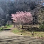 Lunch Break On The Trails?!: Four Ideas For A Quick Nature Run In West Tokyo