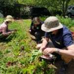 The Sustainable Outdoors: A Farm to Table Experience in the Miura Peninsula