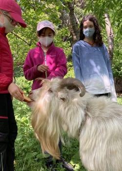 Farm to Table - Farm Animals 14