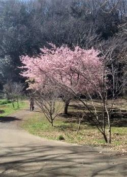 Aso citizen forest